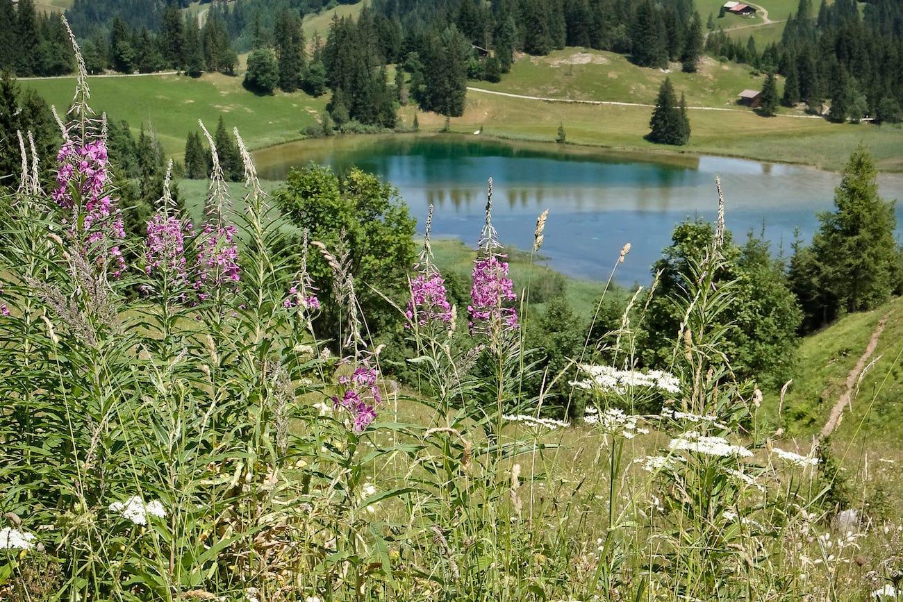 Switzerland - Lauenensee in Summer copy