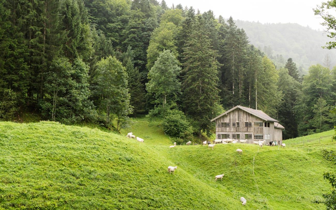 Vorarlberg Bregenzerwald
