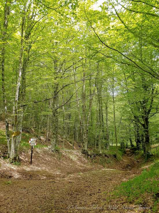 Beech trees forest near Balze, Emilia Romagna Apennines