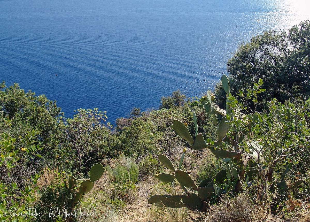 Typical Vegetation on Cinque Terre Blue Path